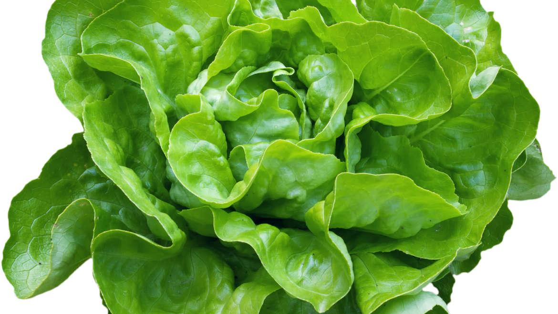 Salade verte de nos jardins caroline kynast - Salade verte composee ...