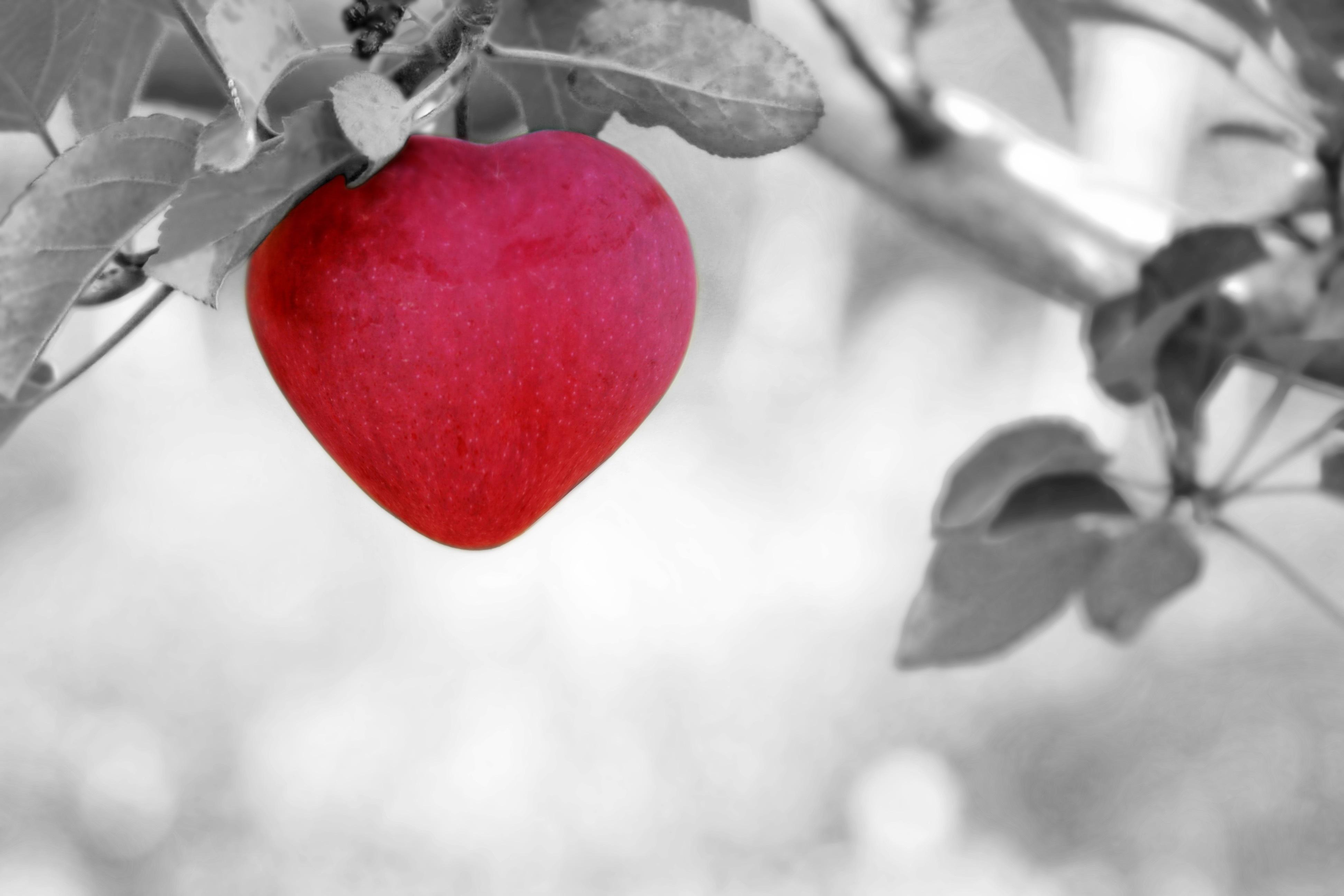 Valentinstag alle Jahre wieder