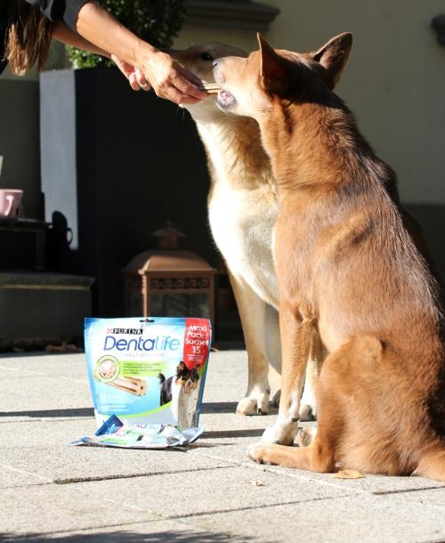 Lifestyle | Gesundheit und Zahnpflege beim Hund