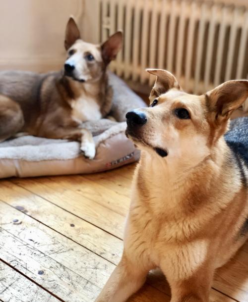 Die Pflege meiner Hunde eine Herzensangelegenheit