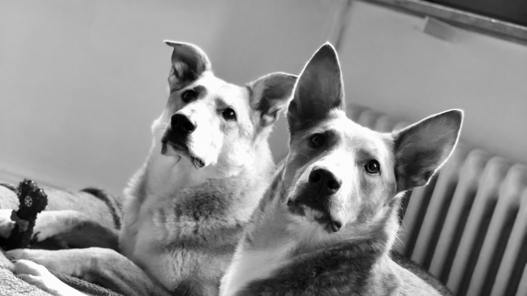 Last Minute Geschenke für Hundeliebhaber