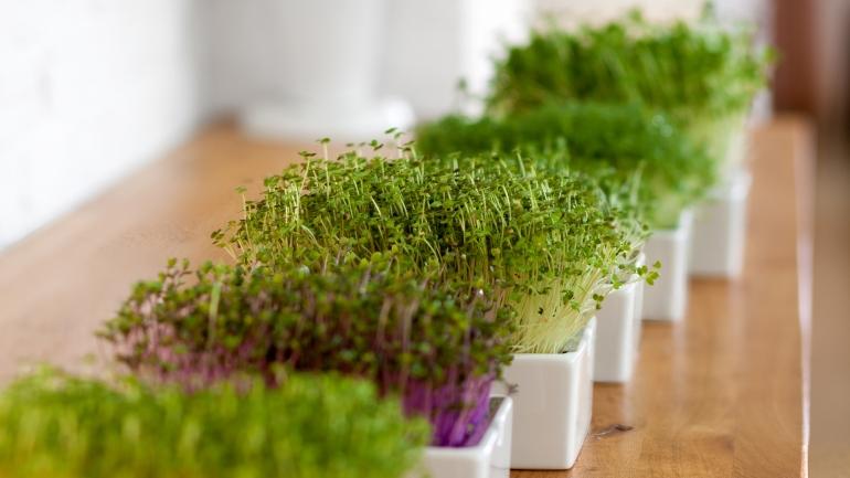 Frische Ernte ohne Garten und Balkon | Heimgart